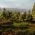 Early Fall On Kebler Pass by Ellen Heaverlo