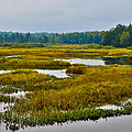 Early Fall On The Moose River - Old Forge New York by David Patterson