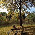 Early Fall by Pema Hou