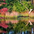 Early Fall Reflection by Beth Sawickie