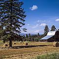Early Harvest by Daniel Hagerman