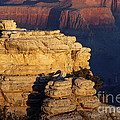 Early Light In The Canyon by Bob Phillips