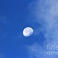 Early Moon by Leone Lund