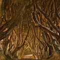 Early Morning Dark Hedges by Derek Smyth