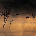 Early Morning Flight by Elizabeth Winter