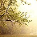 Early Morning Fog by Erin Johnson
