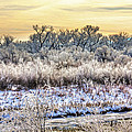 Early Morning Frost by Bob Hislop