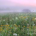 Early Morning Meadow by Wanda Krack