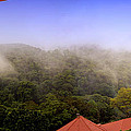 Early Morning Mist Over The Rain Forest by Michael Kogan