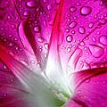 Early Morning Rain by Richard Copeland