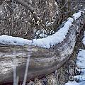 Early Snow by Douglas Barnard