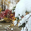 Early Snow by Fiona Kennard