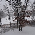 Early Snow by Joe  Barstad