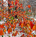 Early Snow by Kathleen Bishop