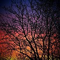 Early Spring Dusk  by Susan McMenamin