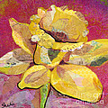 Early Spring IIi  Daffodil Series by Shadia Derbyshire