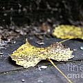 Early Start To Autumn by Nikki Vig