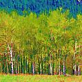 Early Summer Aspen by Brian Davis