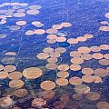 Earth Circles by Anthony Wilkening
