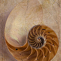 Earthy Nautilus Shell  by Garry Gay