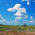 East Texas View by Lizi Beard-Ward