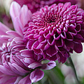 Easter Bouquet Flowers Mums And Dahlia by Michael Moriarty
