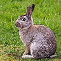 Easter Bunny by John Ferrante