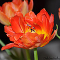 Easter Parrot Tulips by Debbie Kelly