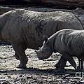 Eastern Black Rhinos Mama N Baby by Gary Gingrich Galleries