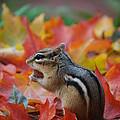 Eastern Chipmunk by Coral Wood
