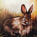 Eastern Cottontail Rabbit by Sandi OReilly