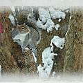 Eastern Gray Squirrel - Sciurus Carolinensis by Mother Nature