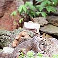 Eastern Grey Squirrel  by Stephanie Frey