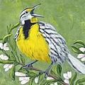 Eastern Meadowlark by Fran Brooks
