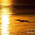 Easy Glider by Joe Geraci