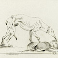 Eating Dog, D. Merrem by D. Merrem