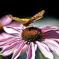 Echinacea And Friend by Cheryl Baxter