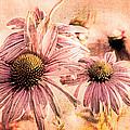 Echinacea Impressions  by Bob Orsillo