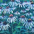 Echinacea by Jan Bennicoff