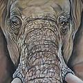 Echo Of The Elephants  by Cynthia Farr