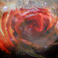 Echoes Of The Rose by Judy Paleologos