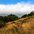 Ecola Trails by Robert Bales