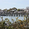 Edgartown Harbor With Wildflowers by Carol Groenen
