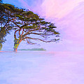 Edge Of A Dream - Lake Nicaragua Landscape by Mark E Tisdale