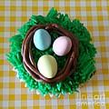 Edible Bird's Nest by Gail Matthews