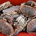 Edible Crabs  by Gary Bridger