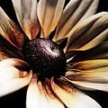 Efflorescence by Jessica Brawley