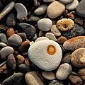 Egg Pebble by Russ Dixon
