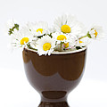 Eggcup Daisies by Anne Gilbert