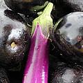 Eggplant I by Robert Yaeger